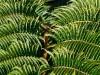 Hawai 0185