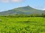 "Mauritius – Plantacja herbaty ""Bois Cheri"""