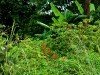 Uganda 2006 0412